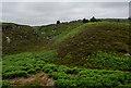 NZ0297 : Head of Cove Glen by Trevor Littlewood