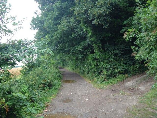 Pilgrims Way, near Wrotham