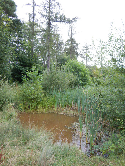 Prince's Coverts - Upper Gravel Pond