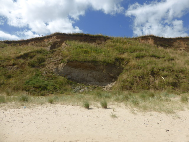Sand martins nesting in the cliffs - Bacton