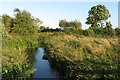 SP6627 : Stream by the footpath by Philip Jeffrey