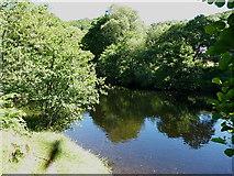 SH7357 : The Afon Llugwy near Cobdens Hotel by Richard Law
