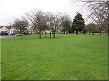 ST6976 : Trees on a green in Pucklechurch by Jaggery