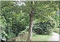 SK9136 : Sedgwick Meadows, Grantham, Lincs. by David Hallam-Jones