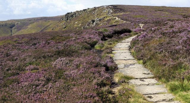 Flagstones through the heather