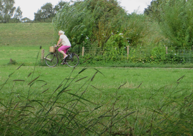 Clifton Ings cycle path, York