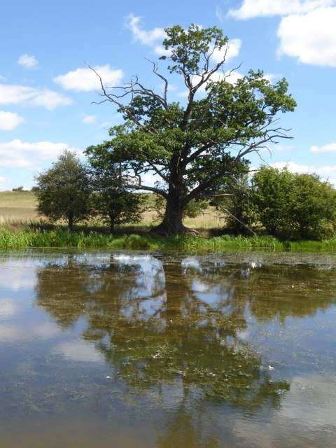 Tree reflected in Croome River