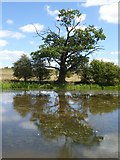 SO8843 : Tree reflected in Croome River by Philip Halling