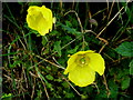 H5373 : Wildflowers, Drumnakilly by Kenneth  Allen