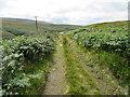 SE0116 : Track through the bracken by John Darch