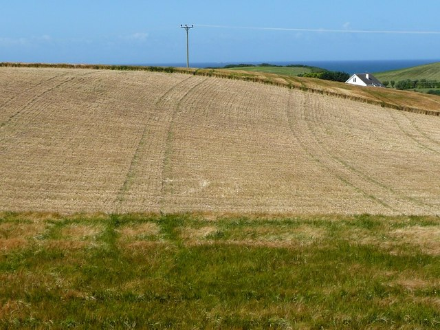 Partially harvested barley field, north of Lhergydhoo Lane