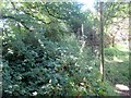 TQ2315 : Overgrown footpath by Peter Holmes