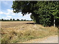 TM0375 : Footpath to Church Meadow by Adrian Cable