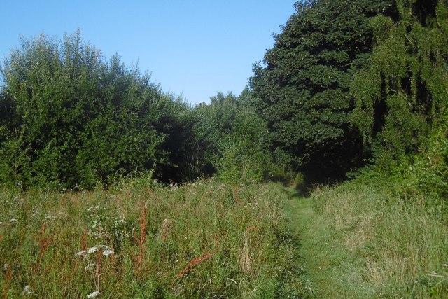 Path, Brierley Wood