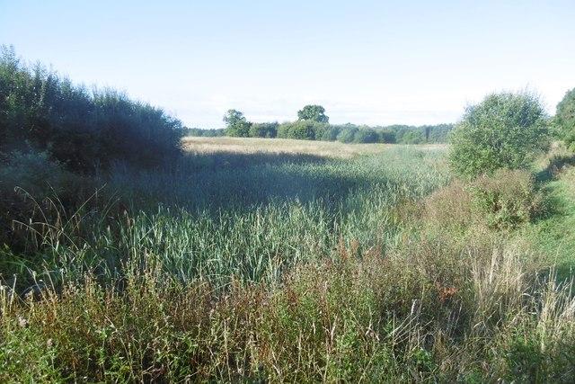 Pond, Pickard's Meadow