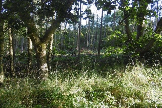 West Carr Plantation