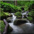 SK0545 : Cotton Brook, Oakamore by Brian Deegan
