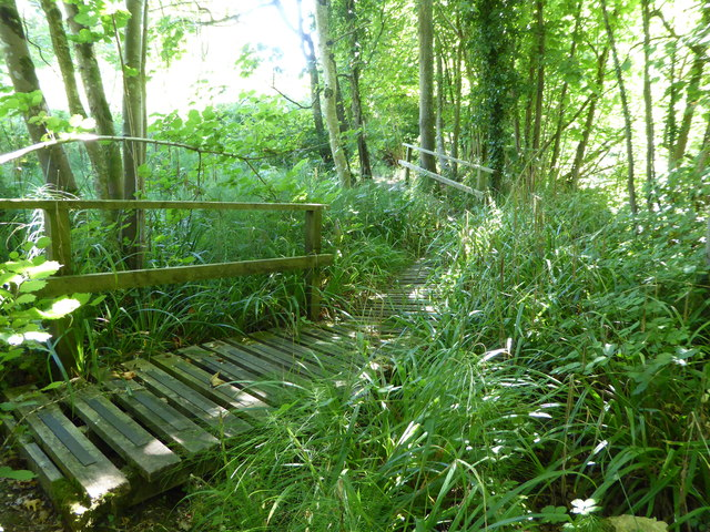 Footpath through woodland above St Edwold's Church, Stockwood