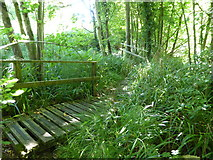 ST5906 : Footpath through woodland above St Edwold's Church, Stockwood by Maurice D Budden