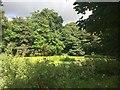 SJ7548 : Pond at Betley Court Farm by Jonathan Hutchins