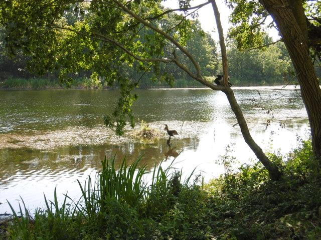 A cormorant on Perch Pond