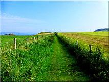 D0444 : Coastal path, Ballintoy by Kenneth  Allen