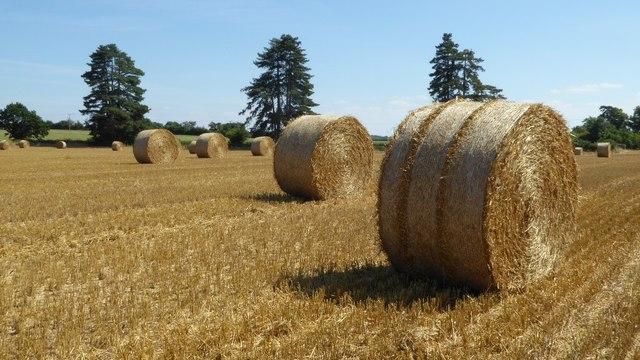 Straw bales at Pirton