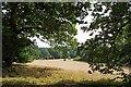 TL3306 : Hay Meadow by Bencroft Wood by Glyn Baker