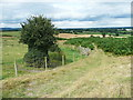 SJ2931 : Old Oswestry: strangely-shaped hawthorn by Humphrey Bolton