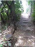 SX9777 : Path near Ladies Mile, Dawlish by David Smith