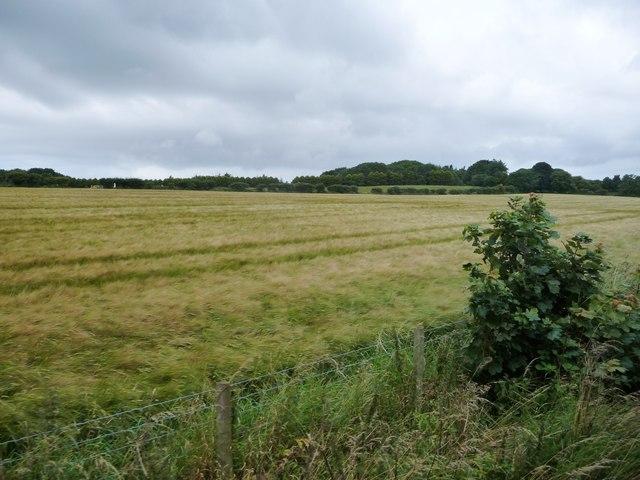 Barley field, north-east of Ballaquaggan Farm