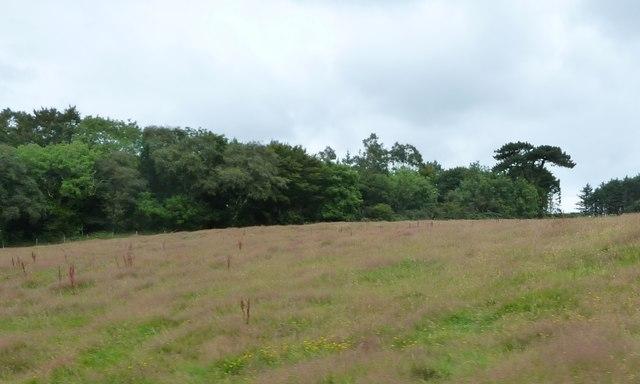 Woodland and farmland near Crogga Bridge