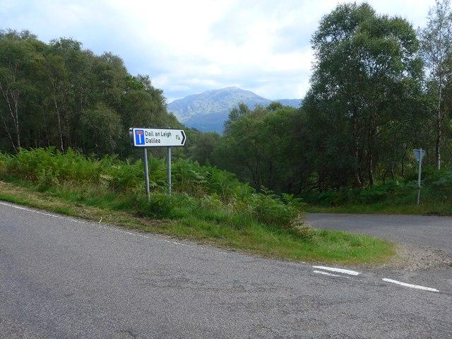 The road to Dalilea