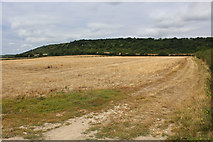 TQ6761 : Field to the West of Birling Place Farm by Chris Heaton