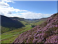 NN8233 : Heather in bloom, Glen Almond by Alan O'Dowd