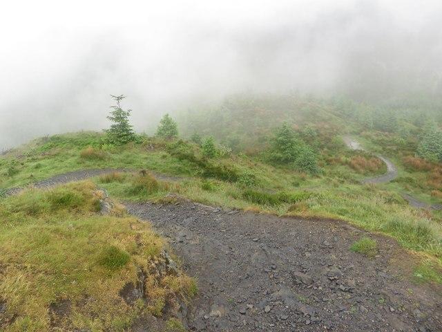 Path on Dodd