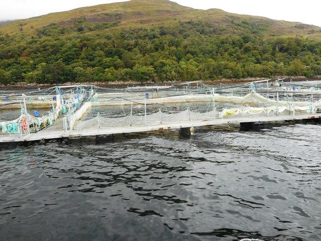Salmon Farms, Loch Linnhe