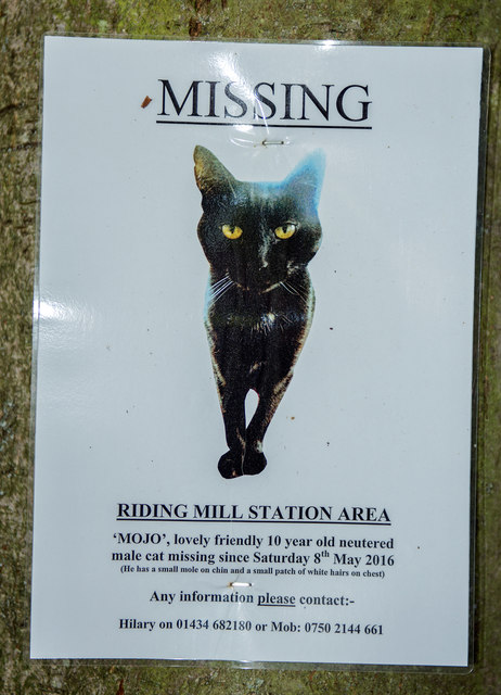 Lost cat poster - Riding Mill