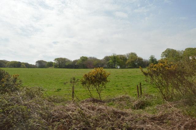 Cornish Countryside