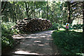 ST7792 : Pile of logs in Longcroft Wood by Bill Boaden