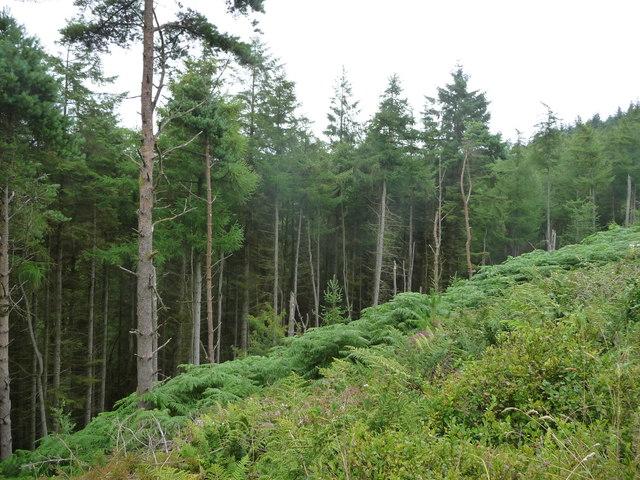 Northern edge of the cleared area, Kerroodhoo Plantation