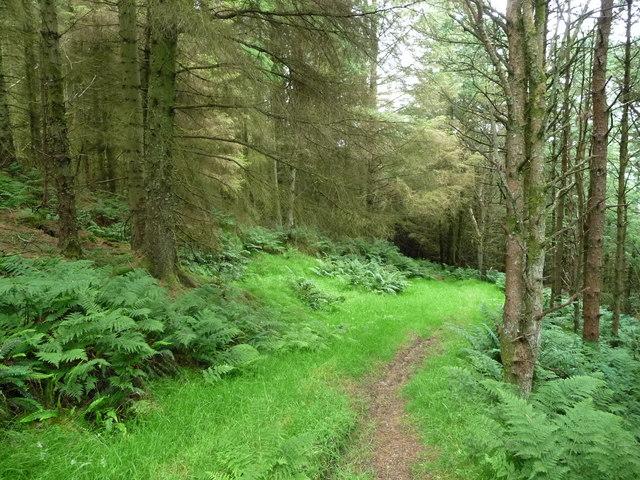 Path down to Barrane through Kerroodhoo Plantation