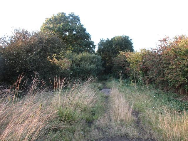 Langton Lane