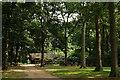 SU9841 : Winkworth Arboretum by Peter Trimming