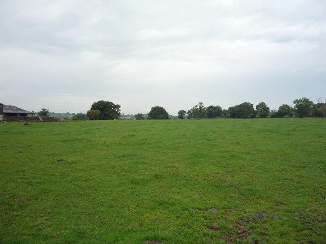 Grazing, Oaks Green Farm
