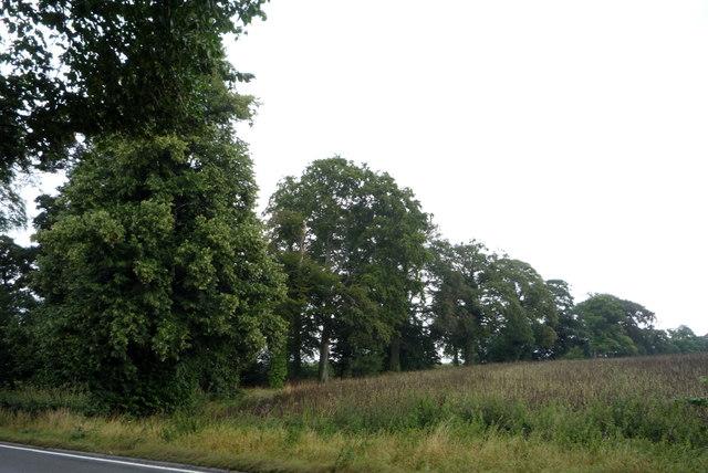 Locker's Knoll woodland