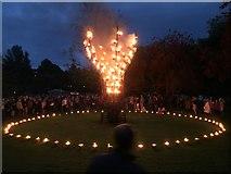 SE2955 : Fire Garden by Andrew Abbott