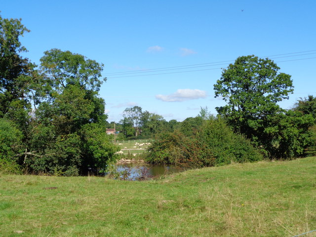 Small pond and sheep