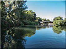 TL3514 : River Lea, Ware, Hertfordshire by Christine Matthews