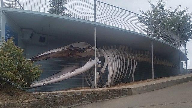 Kilbrittain's marine monster